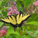 easy steps to create a pollinator garden