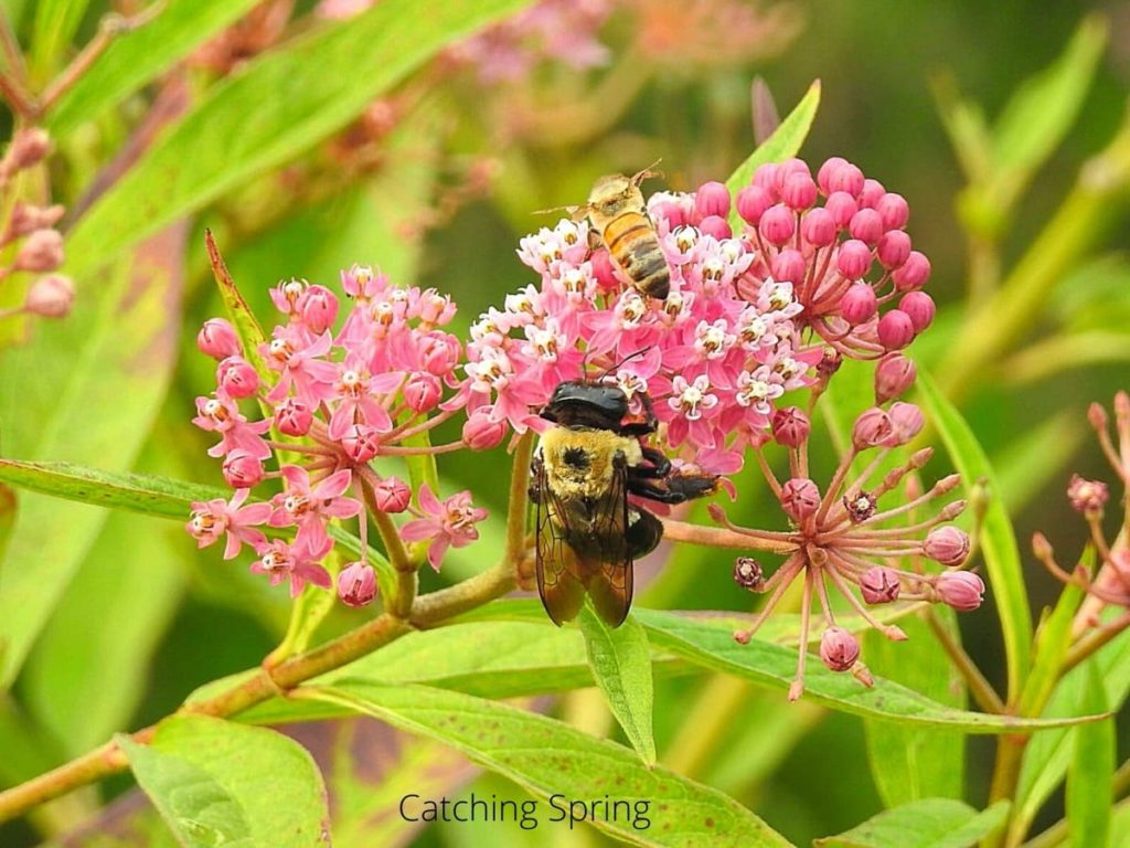 garden pests you may want to protect native bees