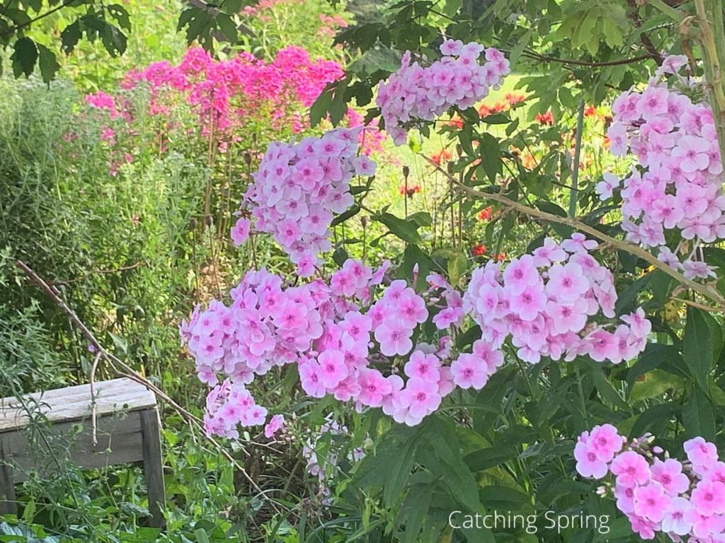 easy steps to create a pollinator garden keep plants healthy