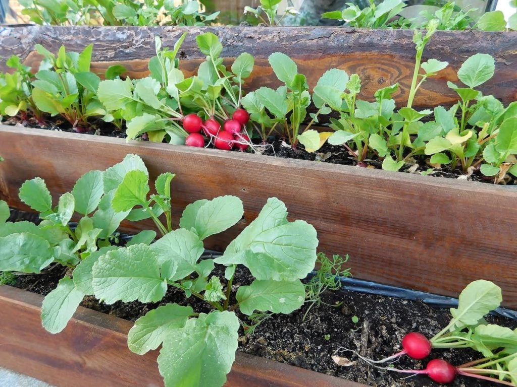 radishes container vegetables you can grow in containers