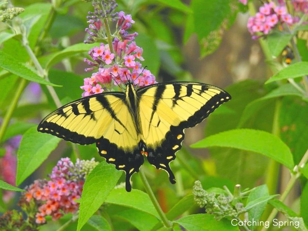best fall flowers for pollinators and beauty buddleia