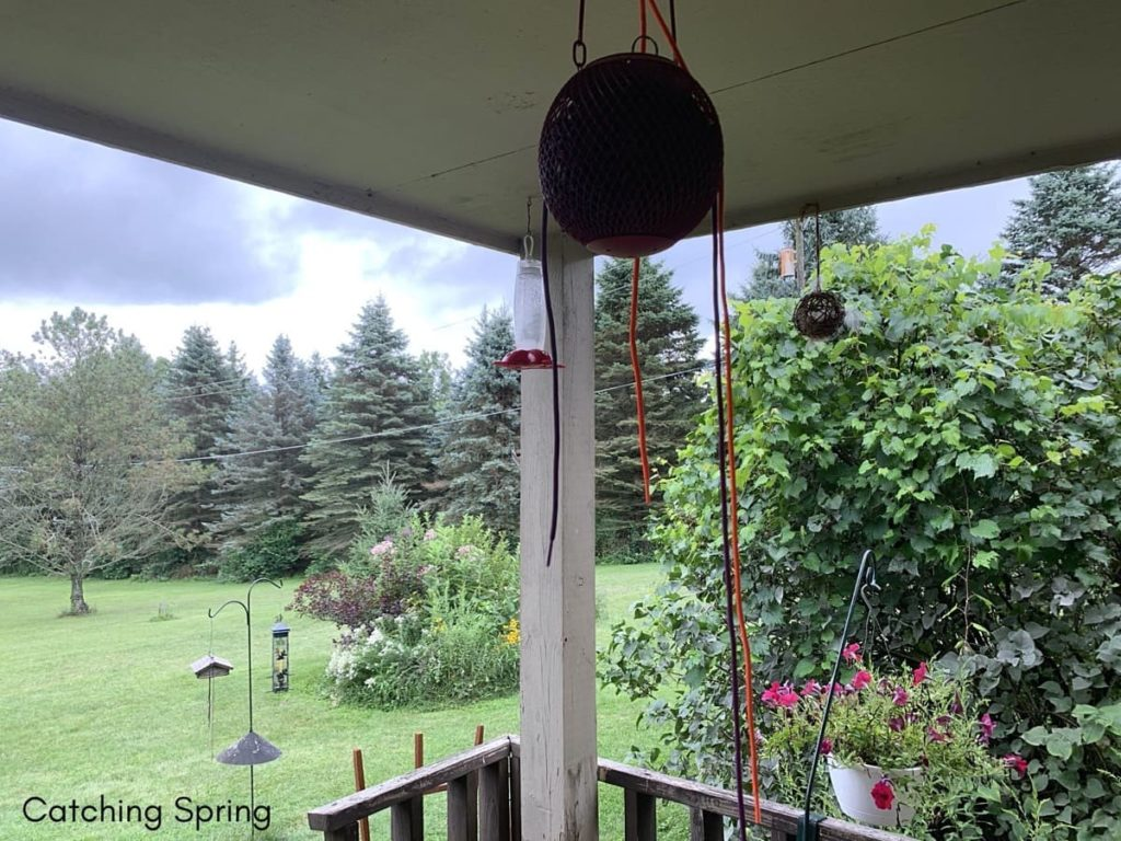 easy and Humane Steps to deter the house sparrow feeder placement matters