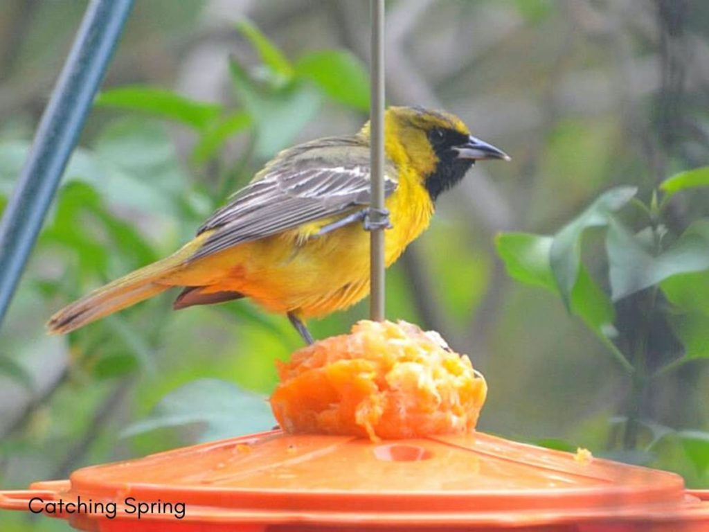 how to create an inviting oasis for backyard birds have a few well-placed feeders