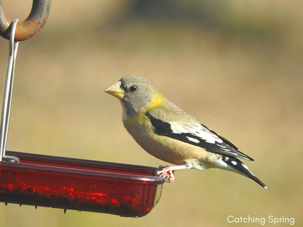 Important ways to help migrating birds this fall keep feeders full of quality seed