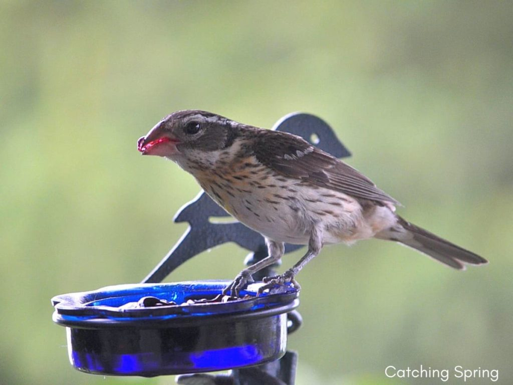 Important ways to help migrating birds this fall leave your jelly out