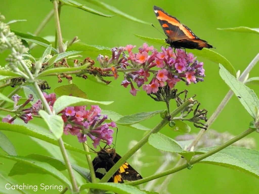 welcome butterflies into your garden with these 9 easy steps absolutely no pesticides