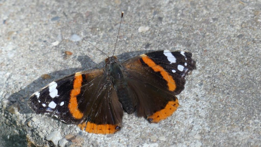 welcome butterflies into your garden with these 9 easy steps place rocks in safe spot for sunbathing