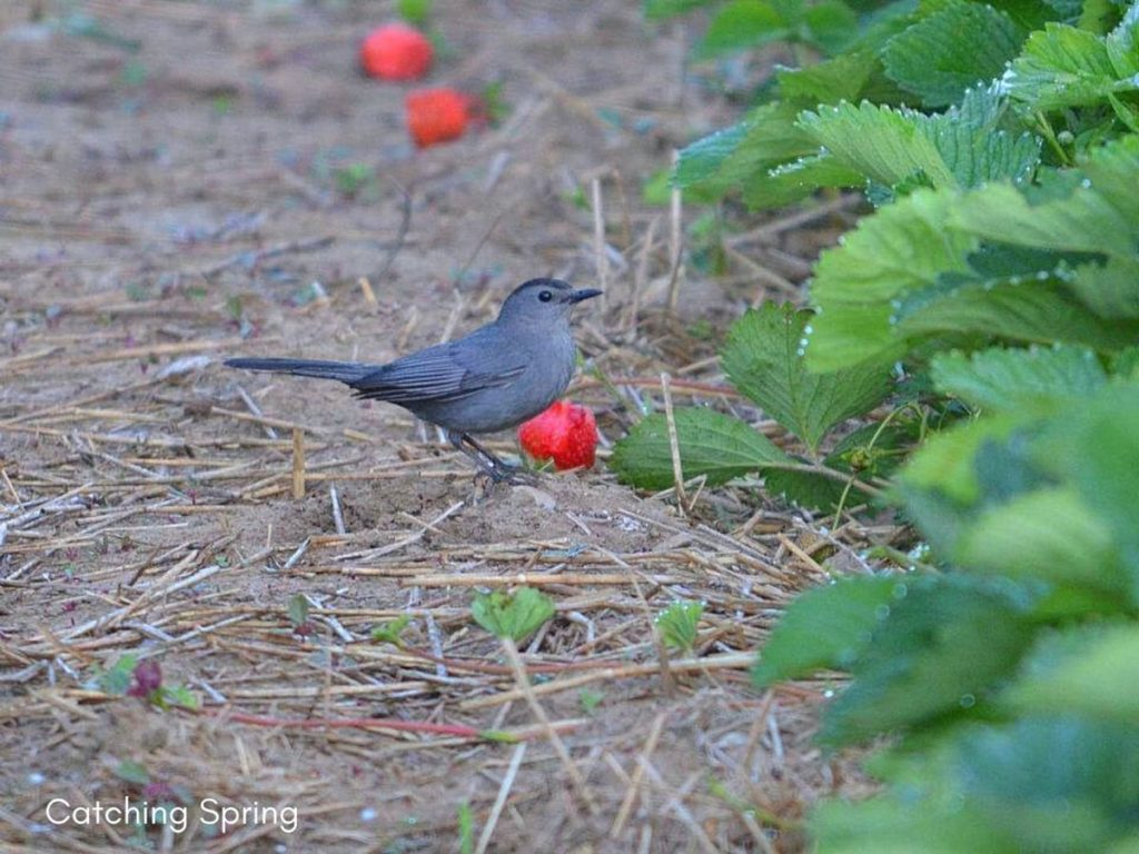 how to create an inviting oasis for backyard birds plant natural bird food