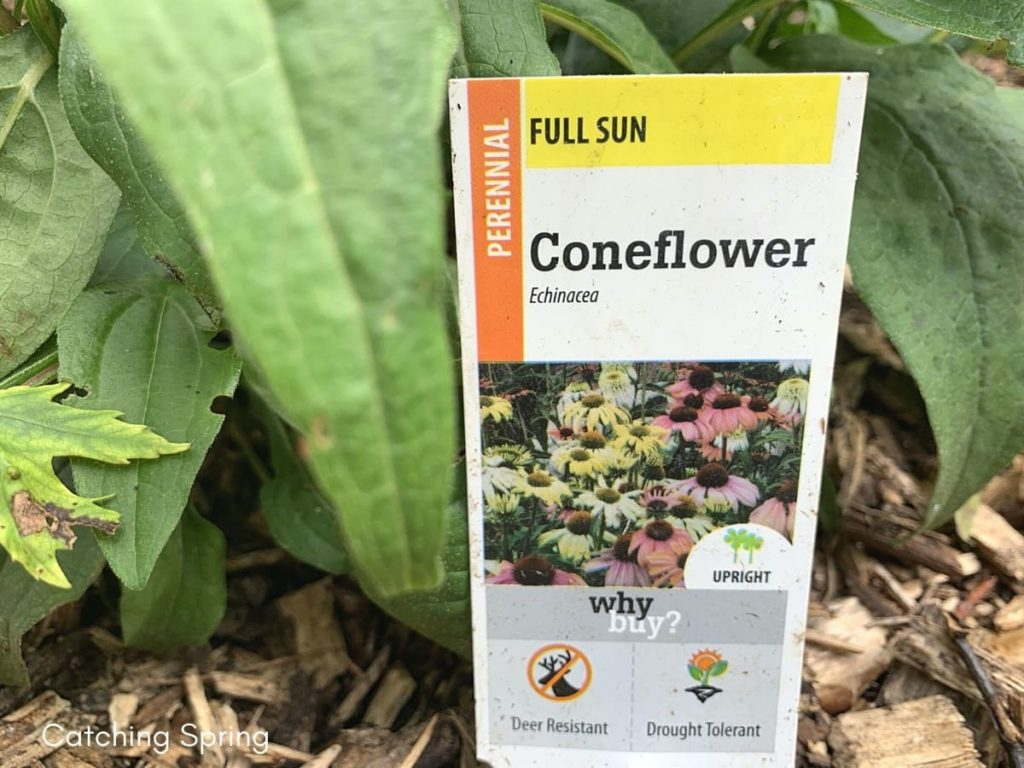 Conserve water in the garden read your plants' care tags