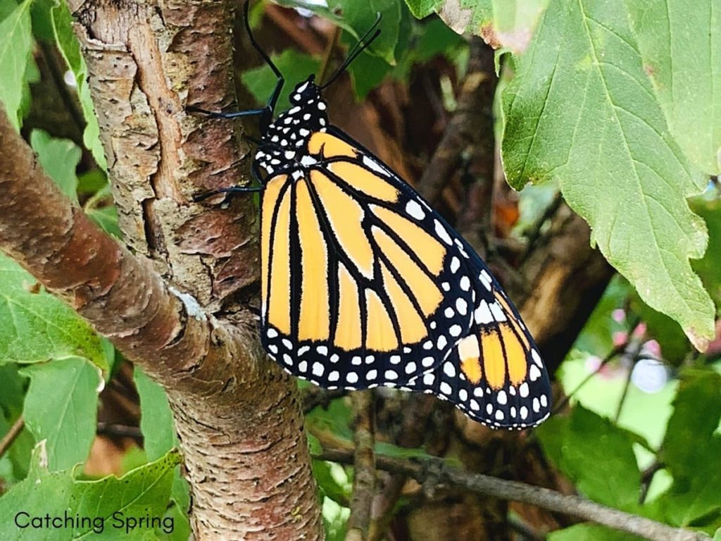 welcome butterflies into your garden with these 9 easy steps have bushes and trees for resting and hiding