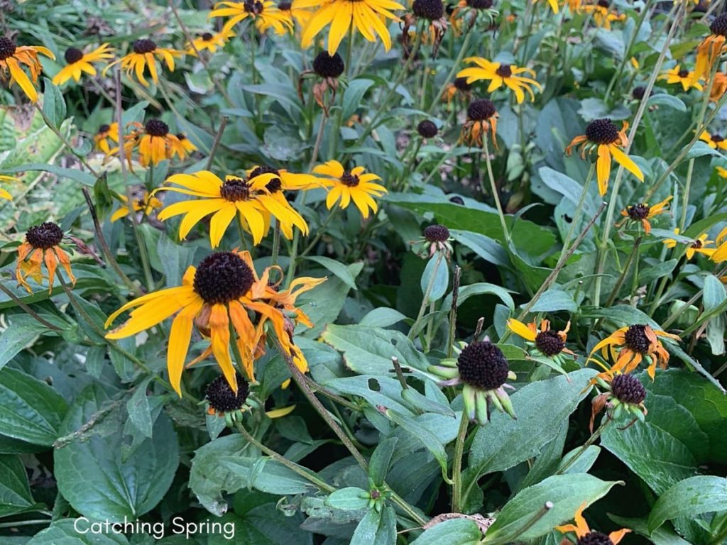 fall garden prep essential things you DON'T want to do and why deadheading all of your flowers