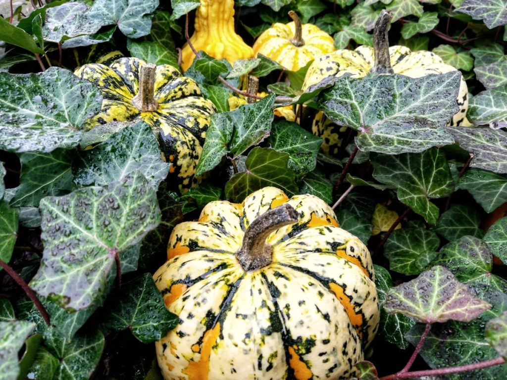 September Gardening Amazing things to watch for gardening by month fall harvest