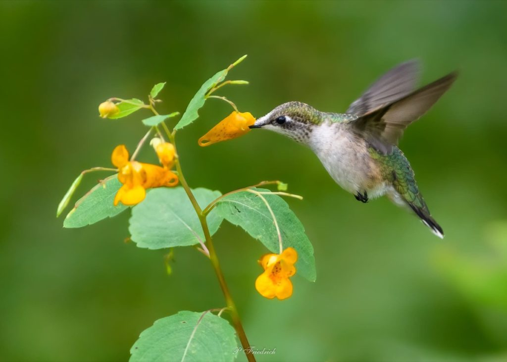September Gardening Amazing things to watch for gardening by month lots of hummingbirds