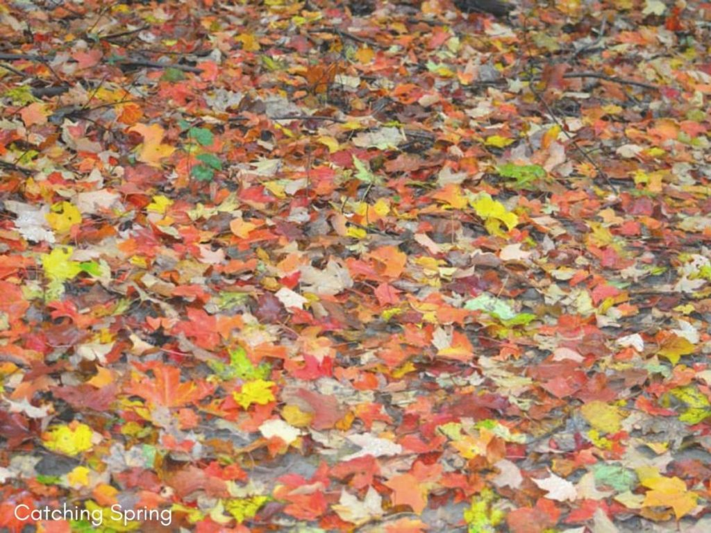 fall garden prep essential things you DON'T want to do and why remove all the fallen leaves