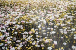 saving seeds from next year from popular flowers