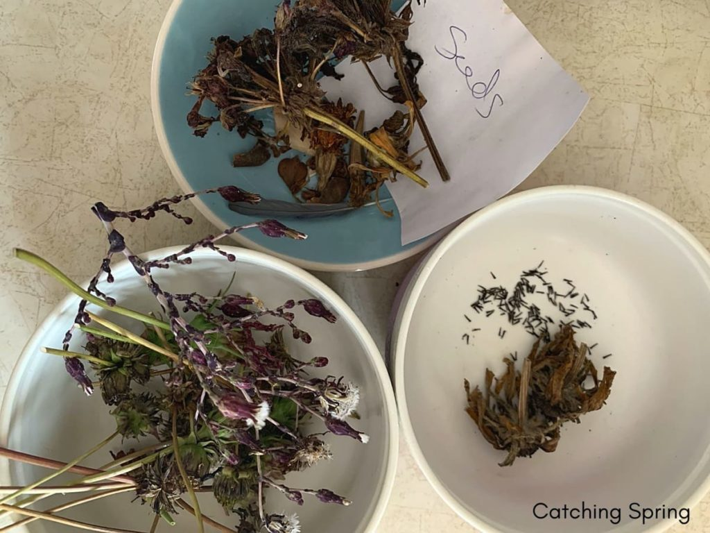 fall garden prep essential things you DON'T want to do and why not collecting seeds