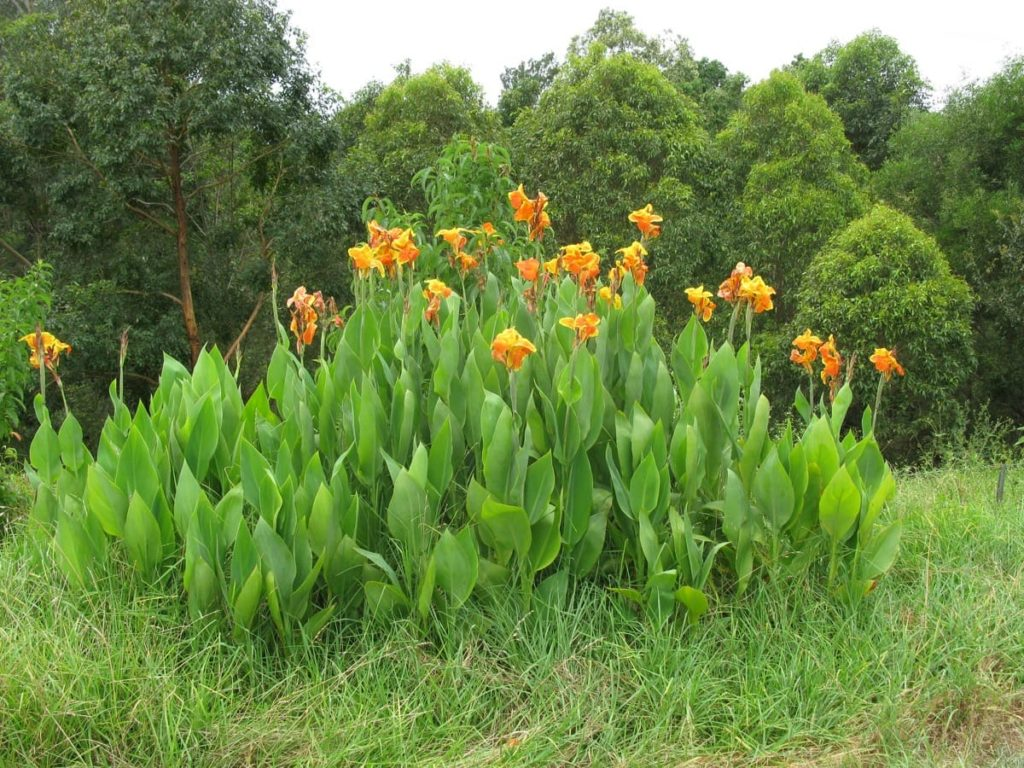 storing tender bulbs 7 helpful tips to successfully overwinter replanting in spring