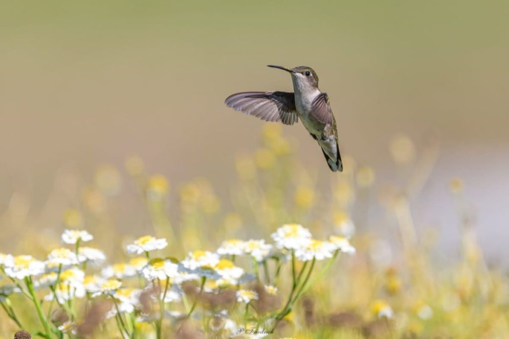Fascinating things to know about migrating hummingbirds how to keep the wasps away