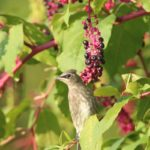 top 10 best fall berry bushes