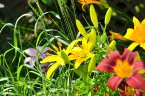 6 questions to ask yourself for a successful garden next year