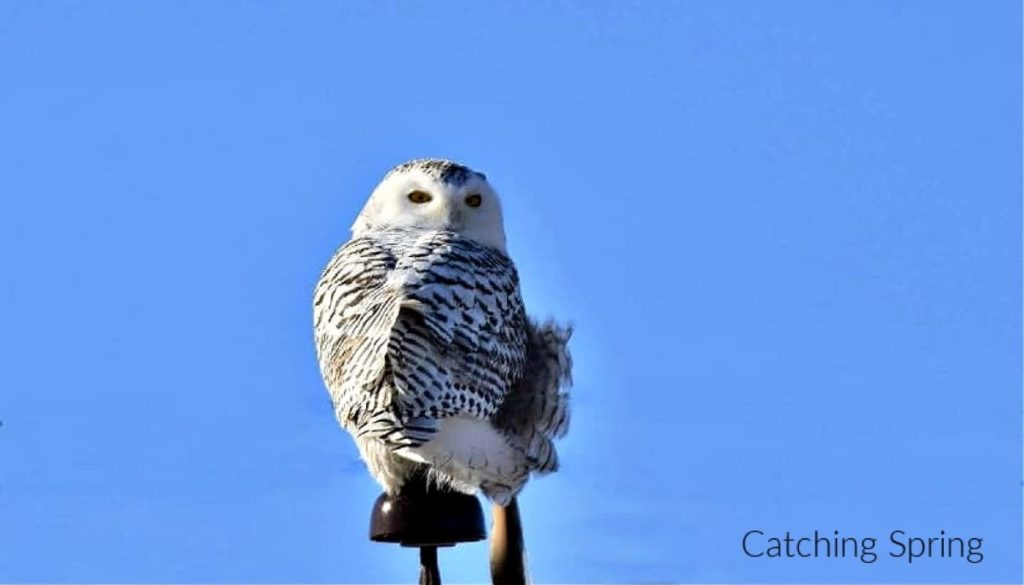 birding etiquette - top 14 list of what not to do NEVER make a bird fly so you can photograph it