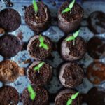 Leggy Seedlings! (7 Ways to Truly Prevent Them)