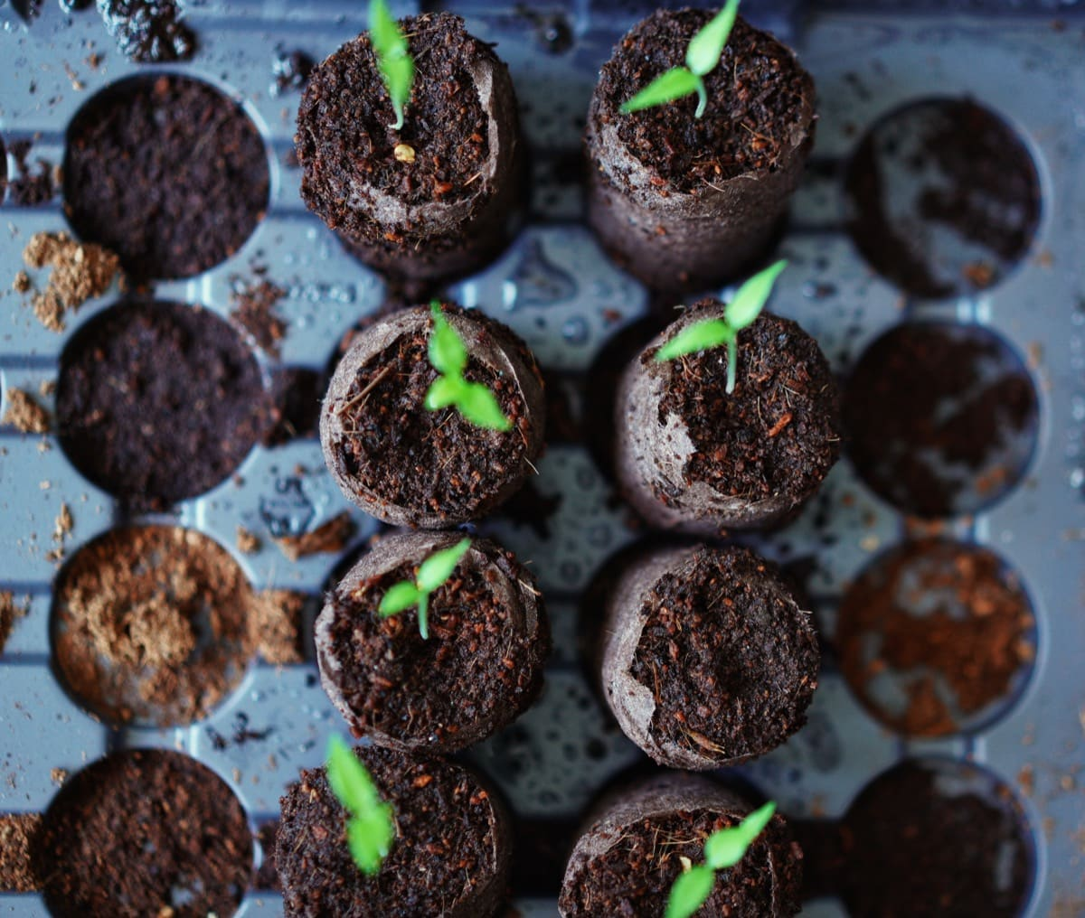 7 ways to truly prevent leggy seedlings