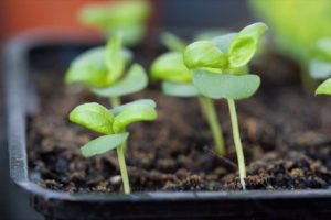 Beginner's guide to starting seed indoors 9 easy steps