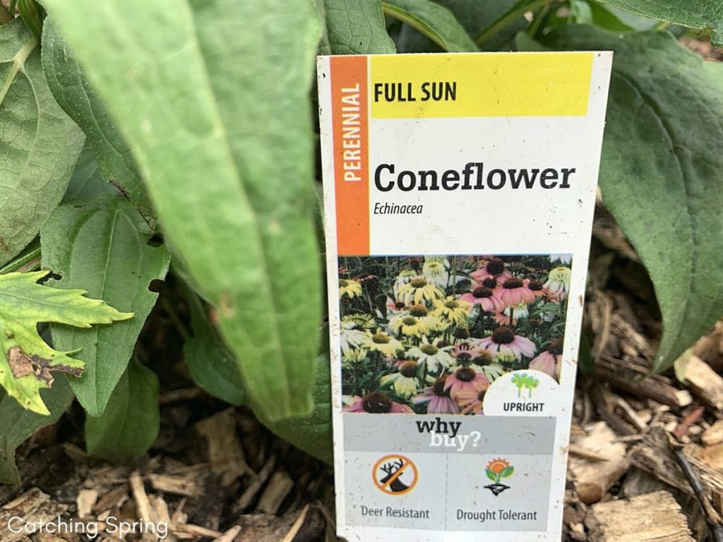 Wallet-Friendly Gardening - 20 Great Ideas to Create the Ultimate Garden read plant labels