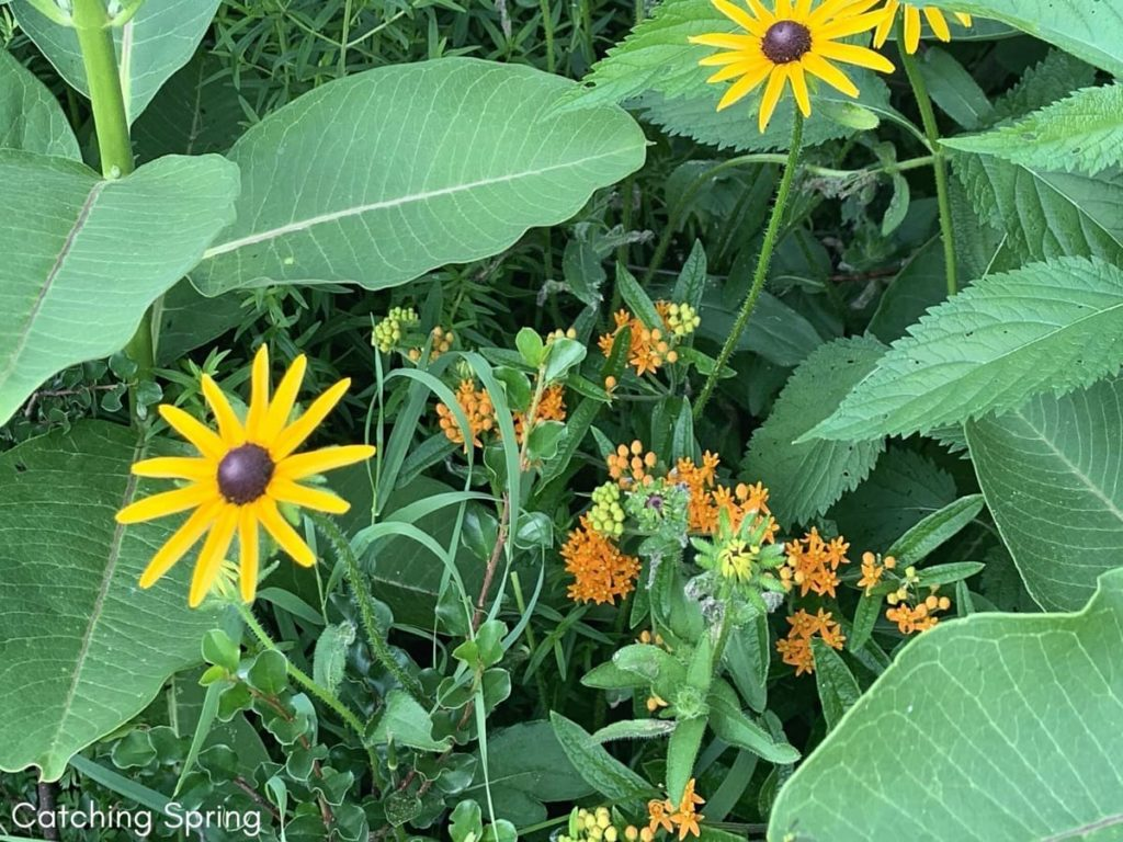Wallet-Friendly Gardening - 20 Great Ideas to Create the Ultimate Garden plant native