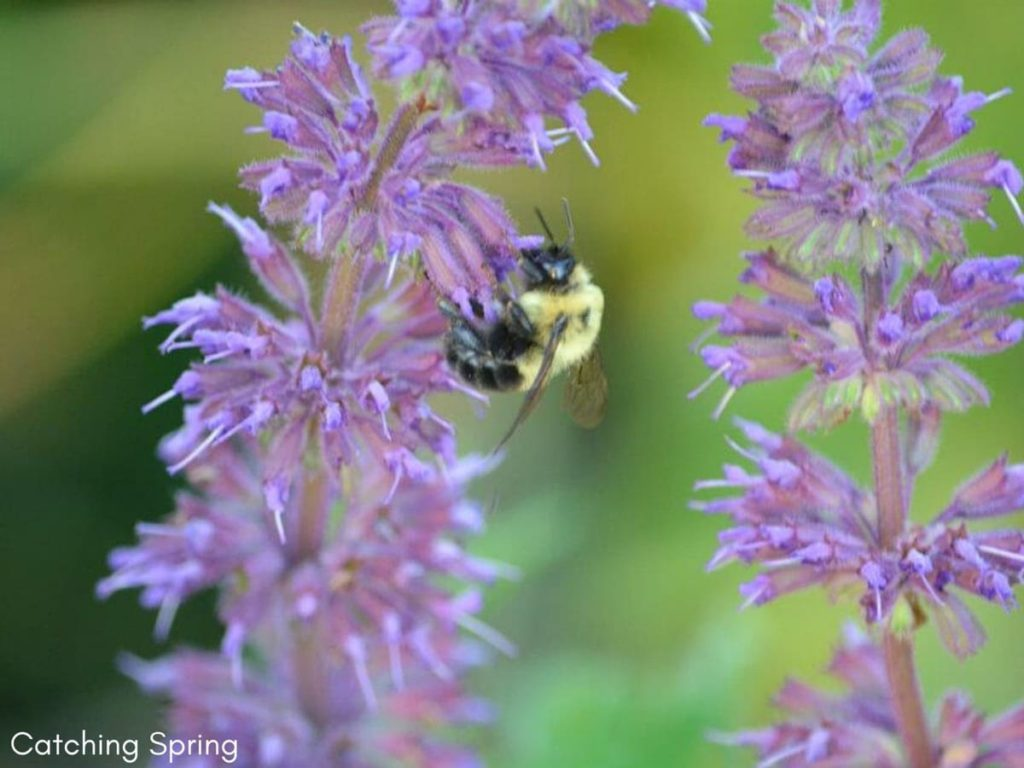 Wallet-Friendly Gardening - 20 Great Ideas to Create the Ultimate Garden plant perennials