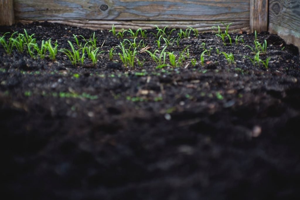 Wallet-Friendly Gardening - 20 Great Ideas to Create the Ultimate Garden pay attention to soil quality