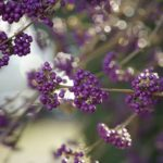 12 Best Winter Interest Plants for the Midwest (and Northeast)