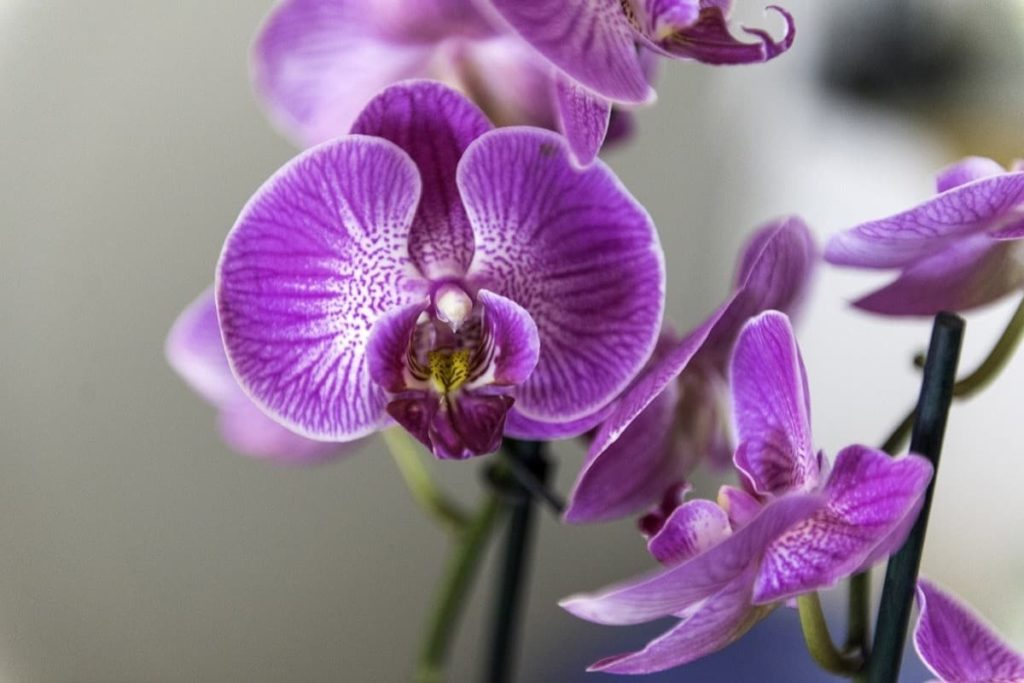 15 Attractive Pet-Friendly House Plants You Can Safely Grow orchid