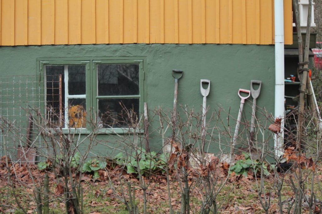 Common Garden Mistakes to Avoid in Spring cleaning up the garden too early