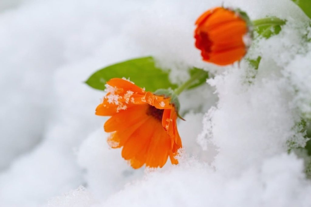 Common Garden Mistakes to Avoid in Spring planting too early