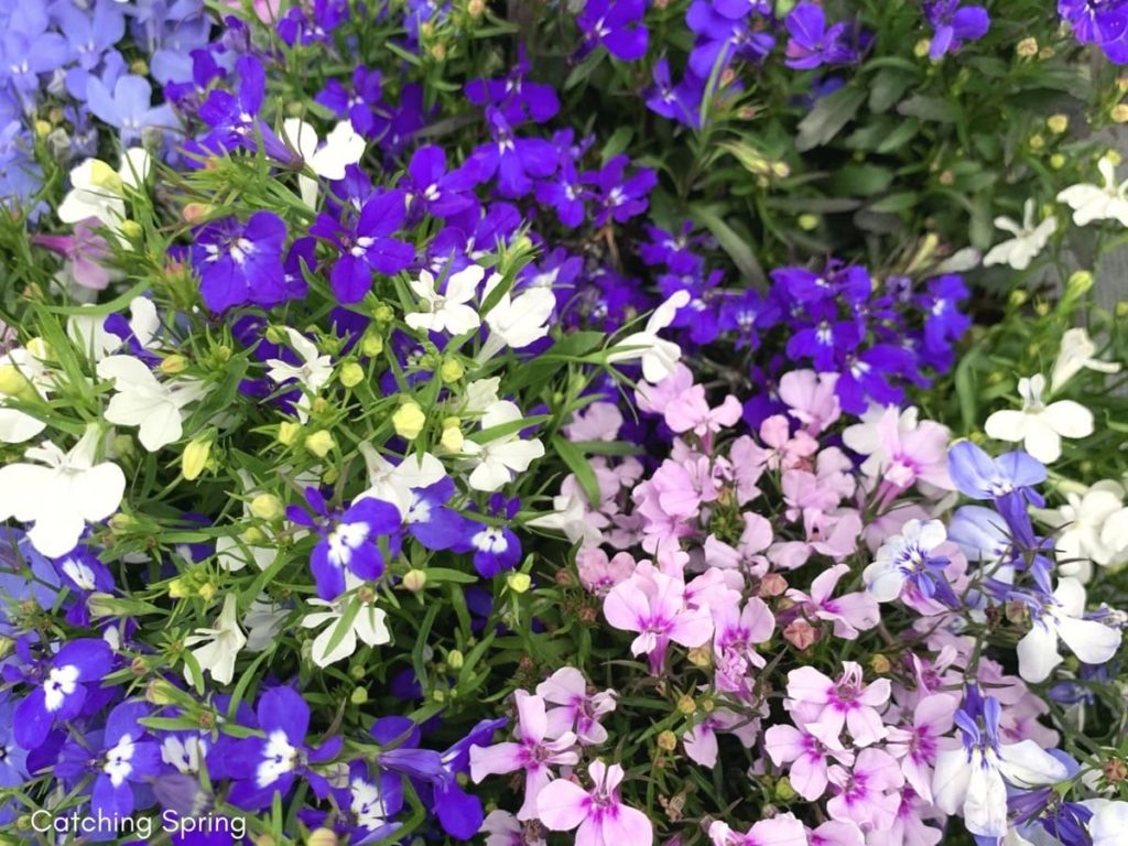 Protect Flowers From Chickens - 8 Proven Tips keep sensitive plants in planters