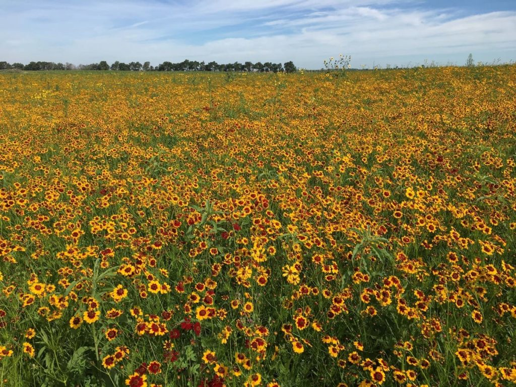 14 Best Seeds for Fall Sowing - native wildflowers